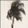Storm Palm No. 10