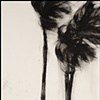 Storm Palms No. 15