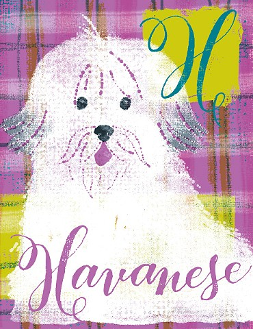 H is for Havanese