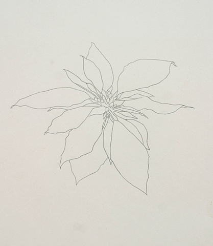Study for Pointsettia drawing (in color)