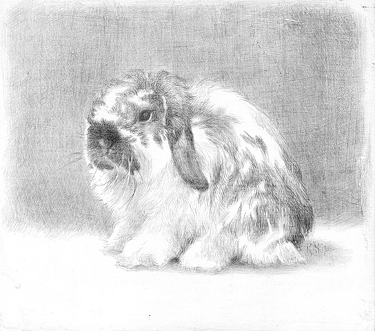 bunny holland lop silverpoint kyle stevenson skewbald