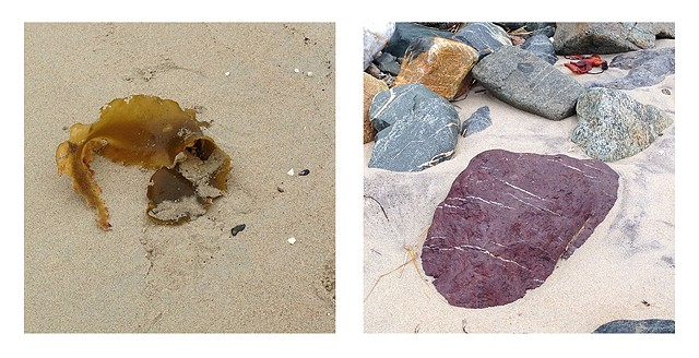 A photographic meditation of sea and shore, rocks and seaweed