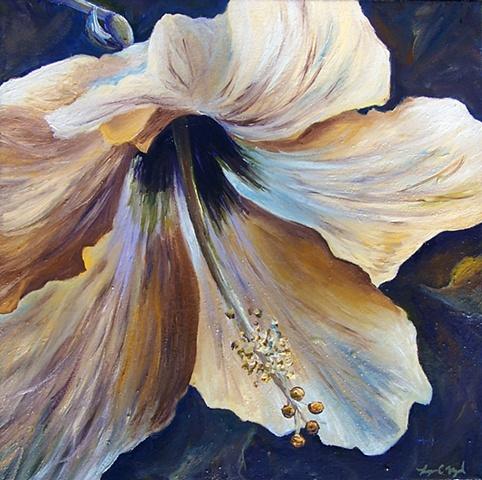 Pale Hibiscus