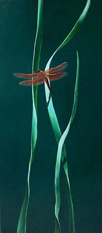 Dragonfly on Blade of Grass #4