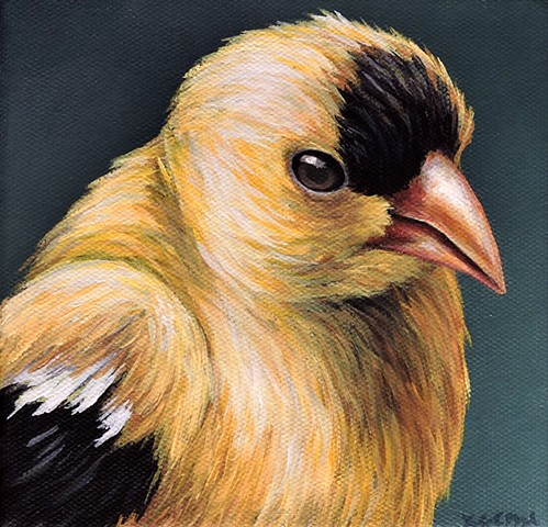 Goldfinch portrait #3