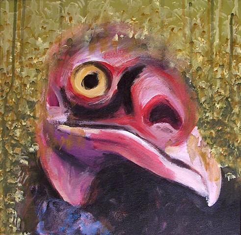 Turkey Vulture portrait (step 6)