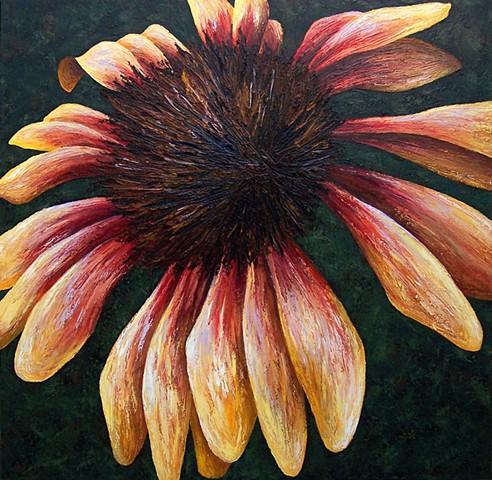 Blanket Flower #2
