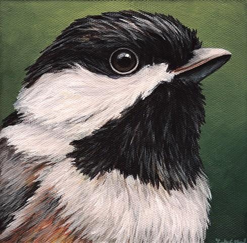 Chickadee portrait #2