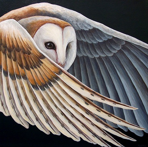 Barn Owl (in flight)