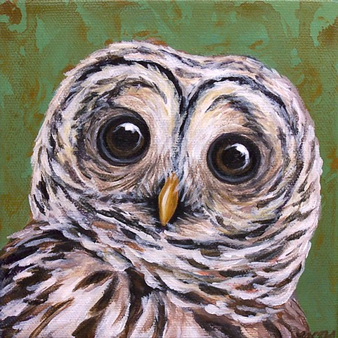 Barred Owl portrait #2