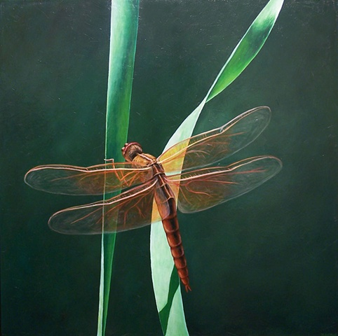 Dragonfly on Blade of Grass #8