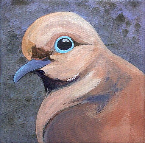 Mourning Dove portrait #1 (step 2)