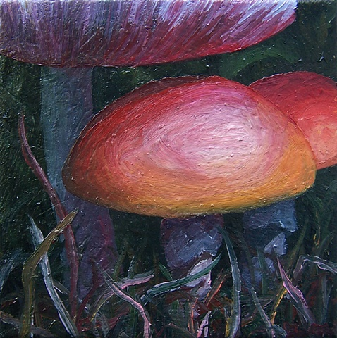 Wild Mushrooms #4
