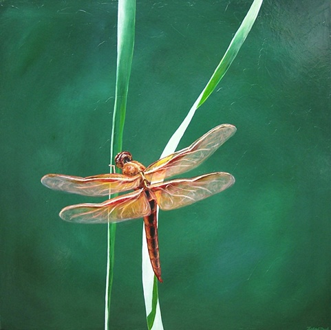 Dragonfly on Blade of Grass #2
