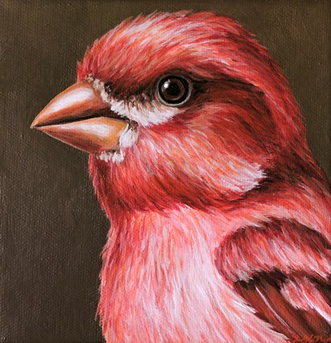 Purple Finch portrait