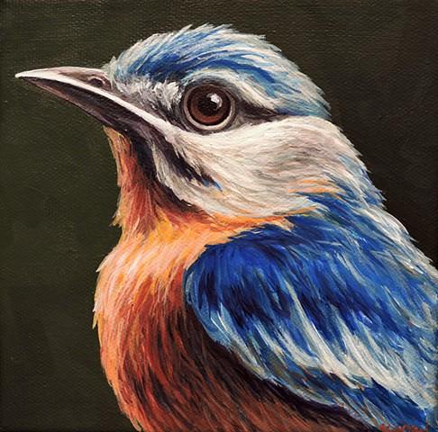 Bluebird portrait #3