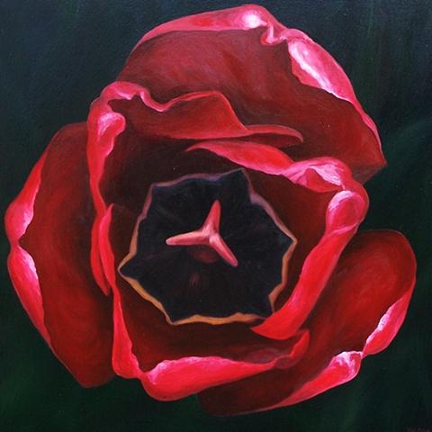 Red Tulip #2