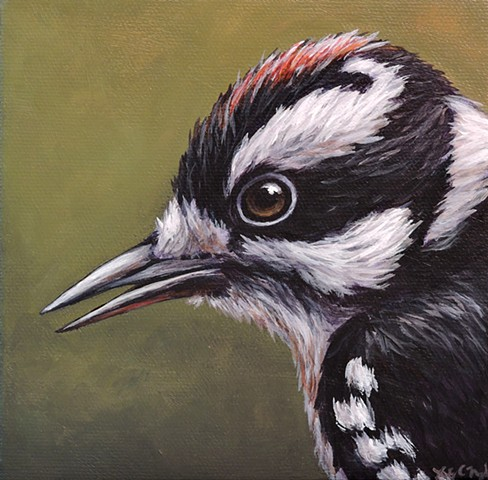 Downy Woodpecker portrait