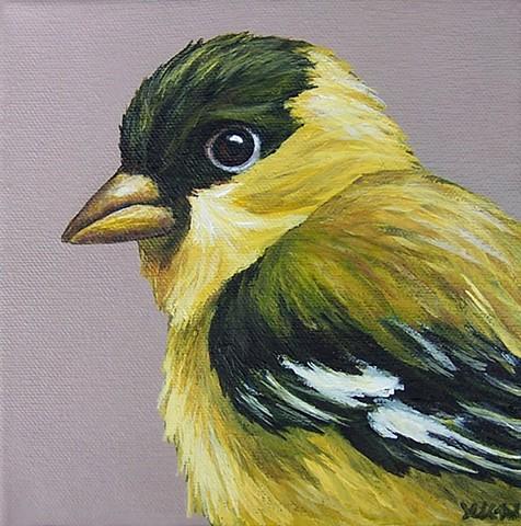 Goldfinch portrait