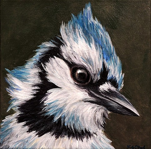 Blue Jay portrait #2