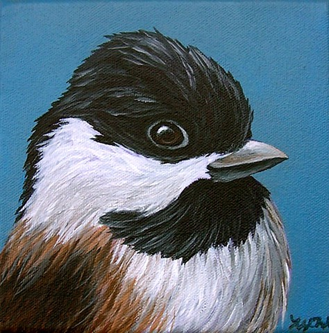 Black-capped Chickadee portrait
