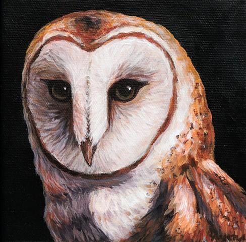 Barn Owl portrait #3