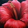 Rose Hibiscus #3