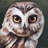 Pygmy Owl portait