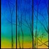 12.13.06, 4:43pm (triptych)