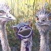 Three Emus (step 6)