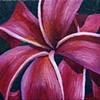 Pink Plumeria #4
