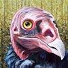 Turkey Vulture portrait (step 8)
