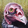 Turkey Vulture portrait (step 9)