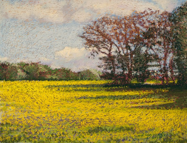 pastel painting, France, yellow canola fields, Jan Maitland,