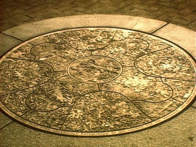 Oak Square Medallion