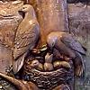 Plaque #6, Minnehaha Falls and Doves