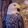 """""""Eagle""""- Detail of the Plaque #1"""