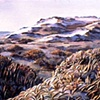 """""""Dunes in the Fall"""""""