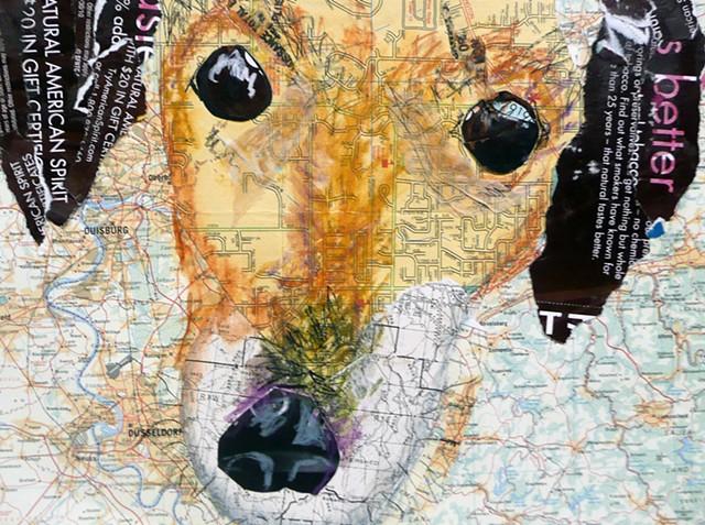 dog collage daushound