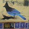 mixed media Stellar Jay and Stamps
