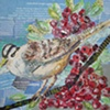 White Crowned Sparrow with Berries