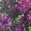 slippage 7 (botanica)