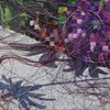 slippage 5 (botanica)