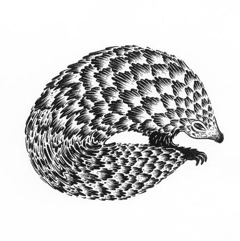 pangolin, pattern