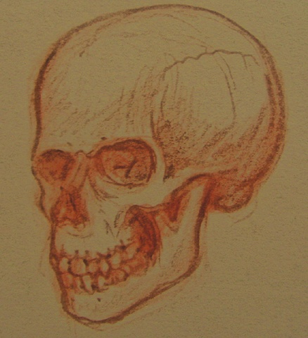 SKULL STUDY- FROM IMAGINATION