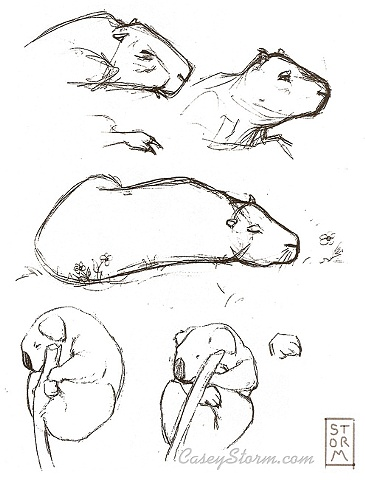 Zoo sketchbook