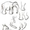 Zoo sketchbook