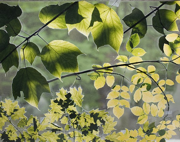 Loose Leaves: Beausoleil