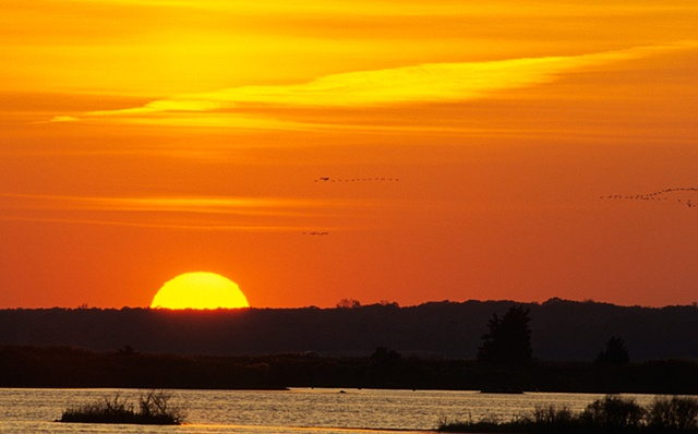 Sunset at Forsythe NWR, with arriving Snow Geese New Jersey