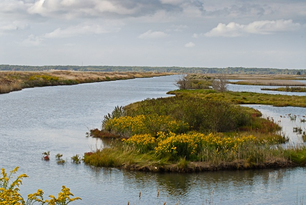 Forsythe National Wildlife Refuge New Jersey